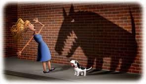 Désensibilisation à la peur du chien