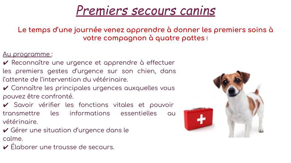 Initiations aux premiers secours canins