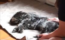 Première séance de massage pour Nyska et Vanille