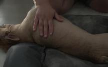 Première séance de massage pour Maggie et Filou