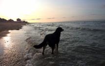 Fin de journée à la plage !